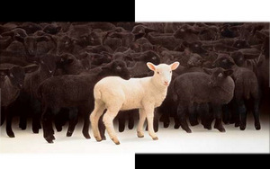 A WHITE SHEEP AMONG THE BLACK - unknown